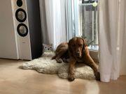 Hunde-Betreuungs-Austausch (