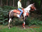 Nettes Freizeit-Geländepferd