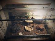 Terrarium mit Geckos 300 VHB