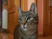 Katze Mina sucht