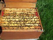 Bienen, Ableger