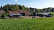 Haltergemeinschaft, Pferdehof, Bayern,