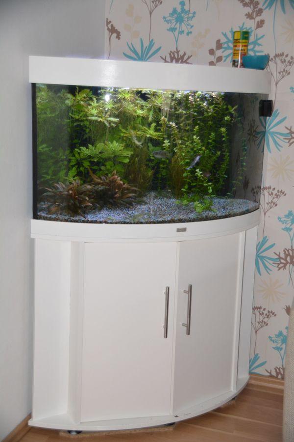 Eck Aquarium kaufen / Eck Aquarium gebraucht - dhd24.com