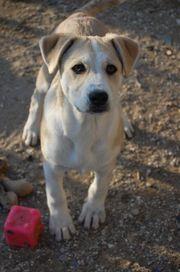 Pongo wunderschöner Traumhund ca 3