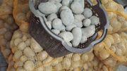 Kartoffeln, Speisekartoffeln, Kartoffel,