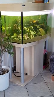 Aquarium 250l Panoramascheibe