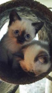 Baby Katzen/Kitten