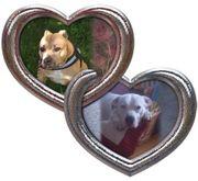 Biete liebevolle Hunde/