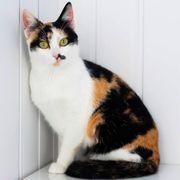 Junge Katzendame Gretchen sitzt auf