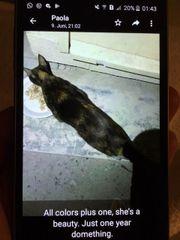 Katze Beauty zu Vermitteln