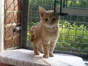 10 niedliche verschmuste Katzenbabys mobil