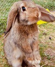 Kaninchenpärchen sucht