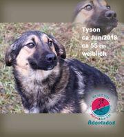 Tyson- Auch ich bin ein
