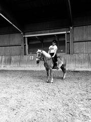 Ich suche dein Pony pferd