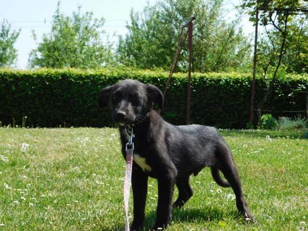 Romeo sucht liebevolles » Hunde