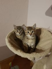 Mira und Miri