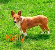 Die kleine Kelly