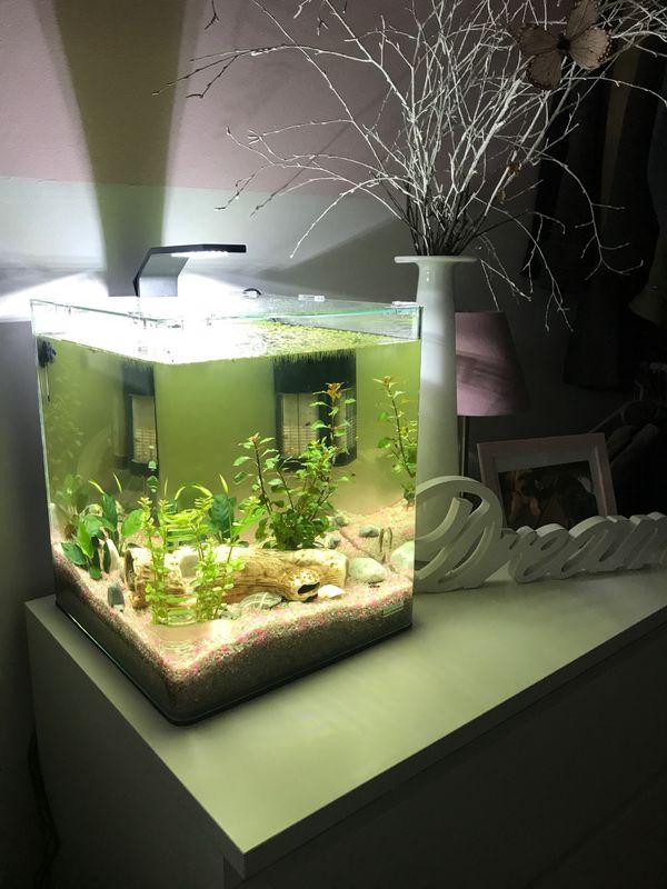 dennerle nano cube mini aquarium 30 liter komplett set in schwabach fische aquaristik kaufen. Black Bedroom Furniture Sets. Home Design Ideas