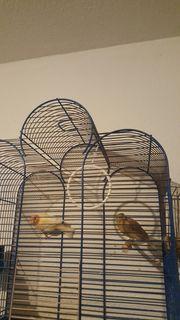 Zwei Vögel zu verschenken