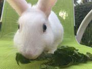 Einige Kaninchen abzugeben