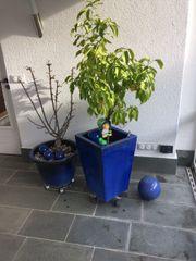Zitronenbaum incl. Topf