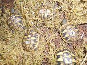 Schildkröten Fachwissen