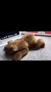 Riesen Teddy von