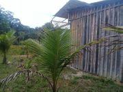 Brasilien 50 Ha Grundstück in