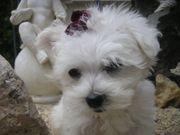 Malteser Babys Mini