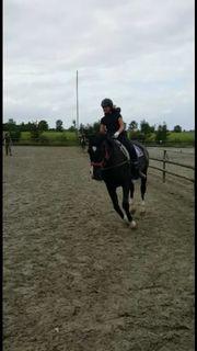 Pferd sucht Reiterin
