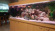 Verkaufe mein Aquarium 720L 200x60x60cm