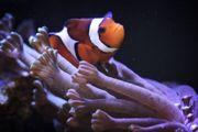 Aquarium in Walldorf sucht Urlaubspflege