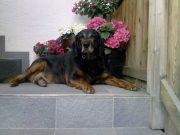Hundesitting/Hundebetreuung (Gassi