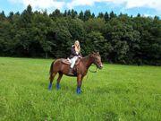 Reitbeteiligung gesucht (Pferd