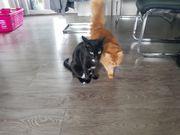 Katzenpaar sucht neues