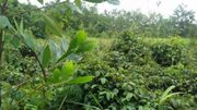 Brasilien 60 Ha Grundstück mit