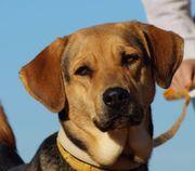 Miranta - freundliches und verschmustes Hundemädchen