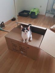 katzenbaby braucht dringend