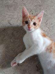 Kitten- Mädchen geb