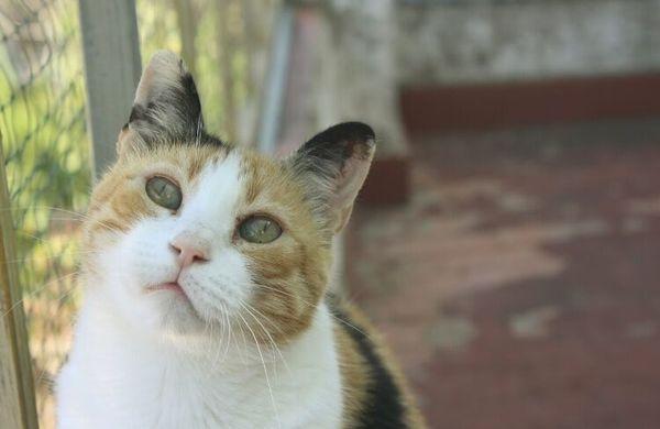 Glückskatze Hermione sucht » Katzen