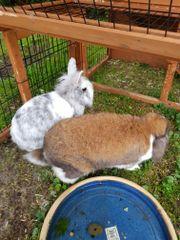 Kaninchen 2 Stück