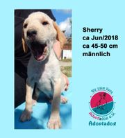 Sherry - süßer Blondschopf