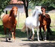 Sattelkurs/ Pferdekurs