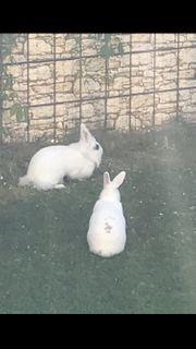 Kaninchen suchen neues Zuhause