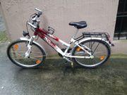 Pegasus Citybike 24