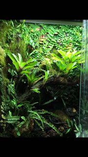 Terrarium Dendrobaten Regenwaldterrarium