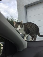 Katze Carly entlaufen