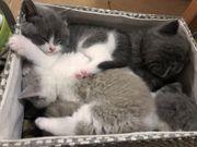 Wunderschöne Halloween-Kätzchen suchen eine neue