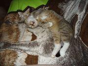 liebevolle priv Katzenbetreuung kein Zwinger