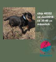 Chip 40332-klein aber fein